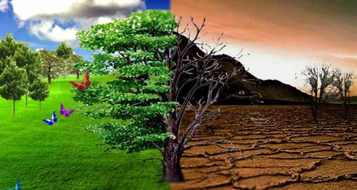 Pelatihan Landscape Pertanahan Lingkungan